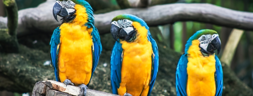 Stochastic Parrots